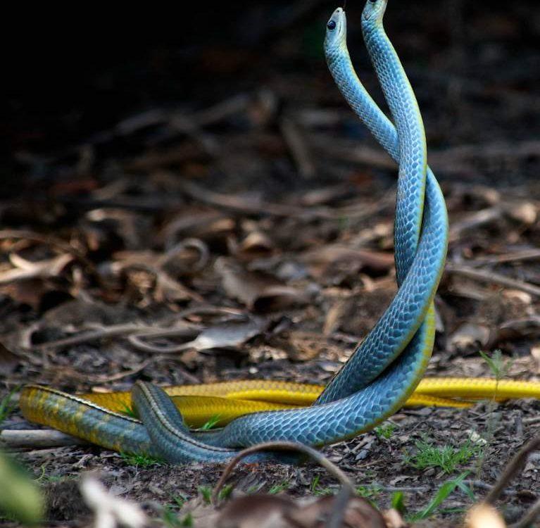 simbolika zmije