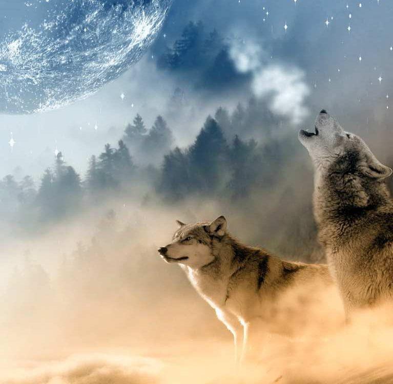 vučji mjesec