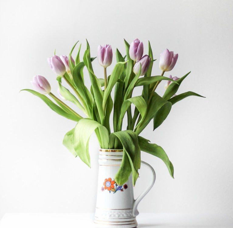 latice tulipana