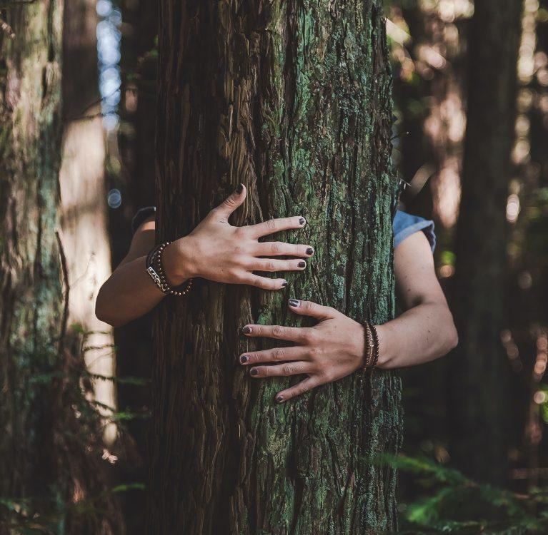 dan sadnje drveta