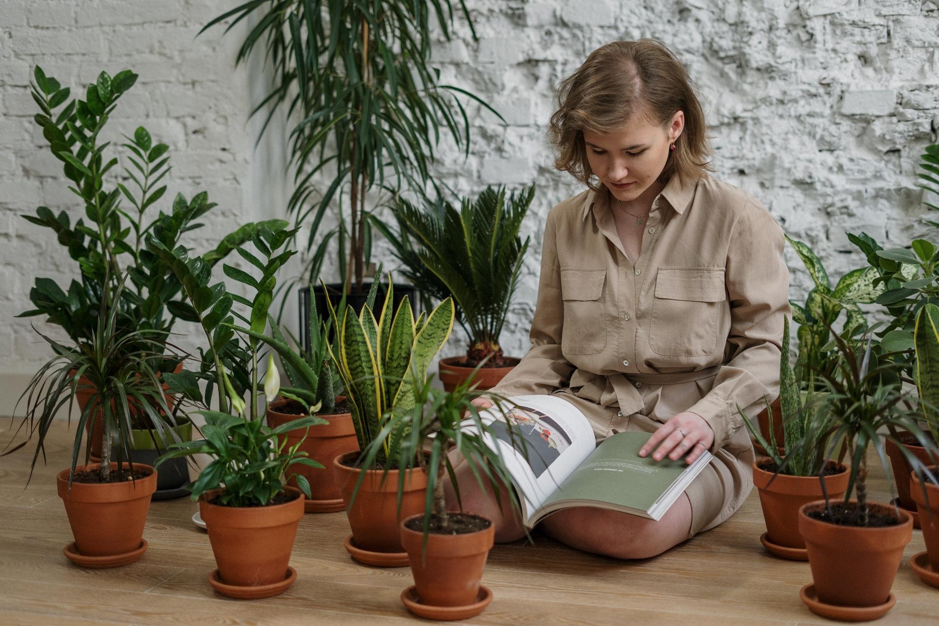 briga za sobne biljke